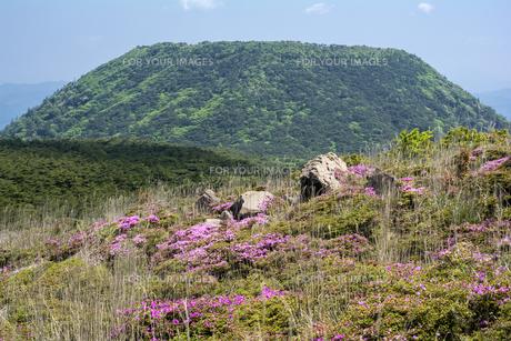 霧島の甑岳とミヤマキリシマの花の素材 [FYI00270918]