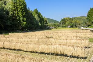 はざ掛けした稲と田の写真素材 [FYI00271077]