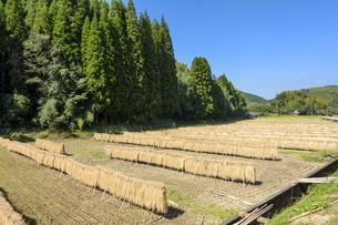 はざ掛けした稲と田の写真素材 [FYI00271082]