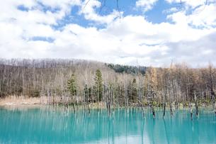 晩秋の美瑛の青い池と空の写真素材 [FYI00271131]