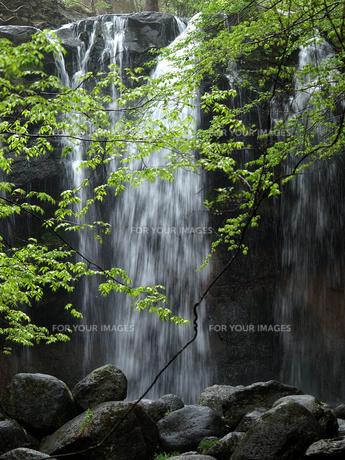 栃木県那須高原の乙女の滝と新緑の素材 [FYI00271192]