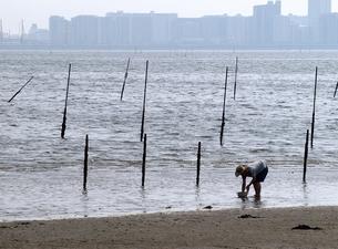 東京湾三番瀬の潮干狩りとビル街の写真素材 [FYI00271325]
