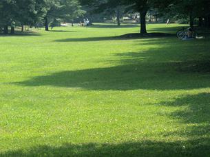 真夏の公園の昼下がりの素材 [FYI00271427]