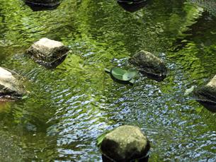 新緑の森の小川と笹舟の素材 [FYI00271430]