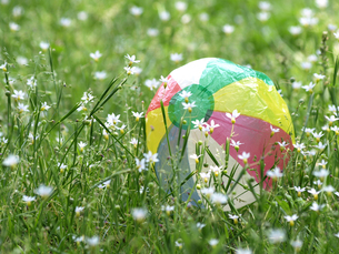 紙風船と野の花の素材 [FYI00271446]