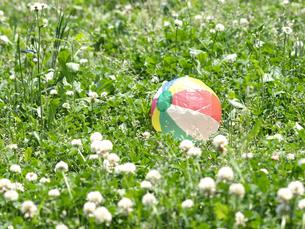 紙風船と野の花の素材 [FYI00271454]