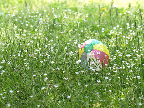 紙風船と野の花の素材 [FYI00271459]