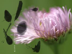 We love the earth 野の花の素材 [FYI00271460]