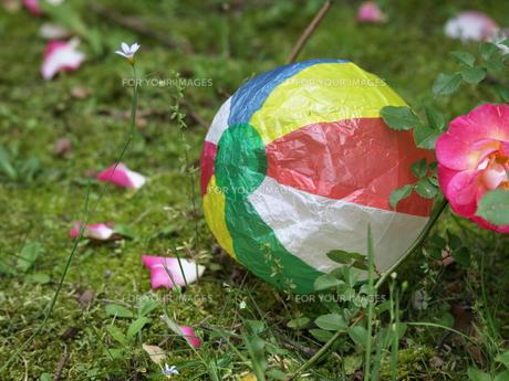 紙風船とバラの花の素材 [FYI00271461]