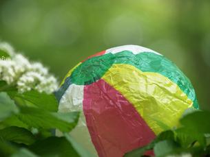 紙風船とガマズミの花の素材 [FYI00271463]