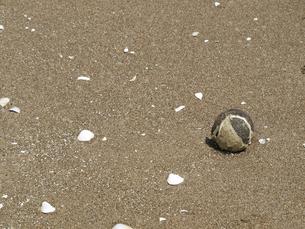 浜辺の漂着物の素材 [FYI00271464]