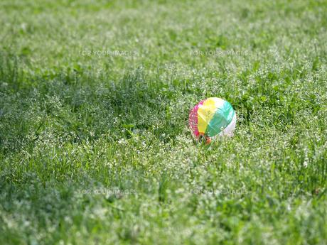 紙風船と野の花の素材 [FYI00271470]