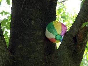 木の上の紙風船の素材 [FYI00271471]