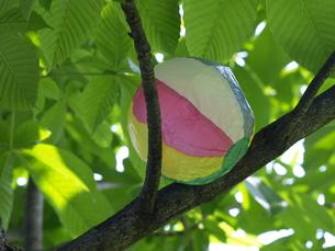 木の上の紙風船の素材 [FYI00271477]
