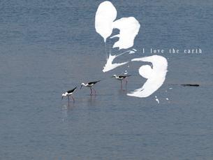 We love the earth 野鳥の素材 [FYI00271488]