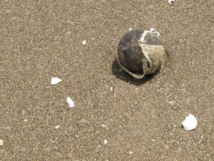 浜辺の漂着物の素材 [FYI00271489]