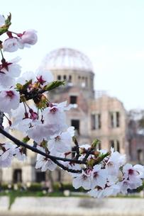桜と原爆ドームの写真素材 [FYI00271542]