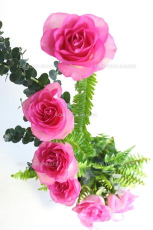 フラワーアレンジメントメント ピンクの薔薇の写真素材 [FYI00271558]