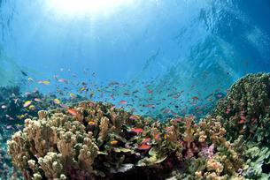 珊瑚礁と海水面の写真素材 [FYI00271577]