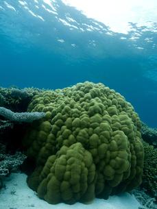 珊瑚の固まりの写真素材 [FYI00271634]