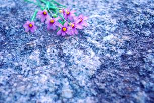 野の花たばの写真素材 [FYI00271713]