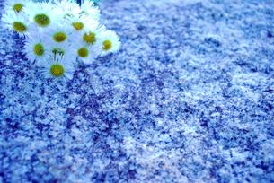 小花の写真素材 [FYI00271722]