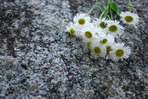 小花の写真素材 [FYI00271730]