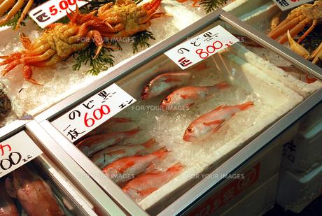 魚のショーケースの写真素材 [FYI00271777]