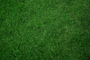 芝の写真素材 [FYI00271803]