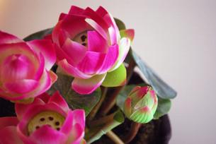 蓮の花の写真素材 [FYI00271860]