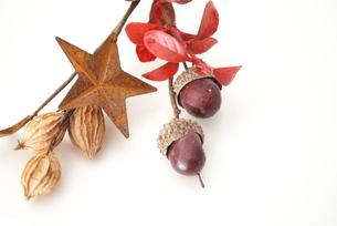 秋の木の実と紅葉の素材 [FYI00271868]