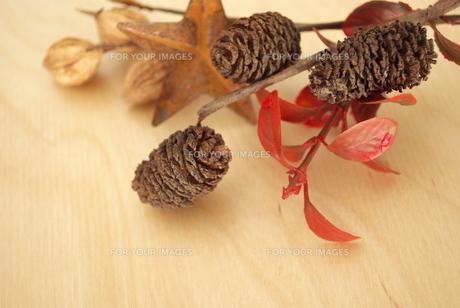 秋の木の実の素材 [FYI00271869]