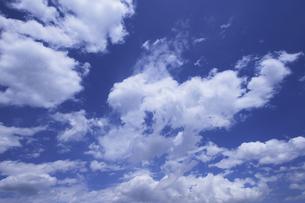 青空の写真素材 [FYI00273455]