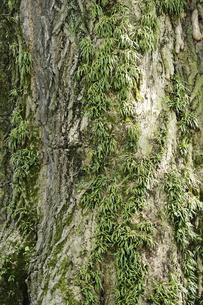 樹皮の写真素材 [FYI00273473]