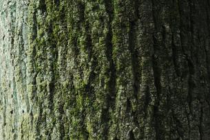 樹皮の写真素材 [FYI00273485]