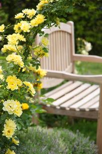 庭園の写真素材 [FYI00273628]