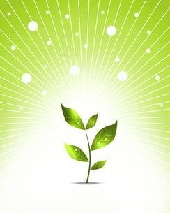 エコロジーの写真素材 [FYI00273973]