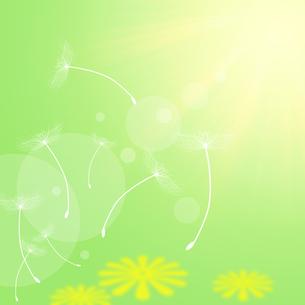 タンポポの綿毛の写真素材 [FYI00274632]