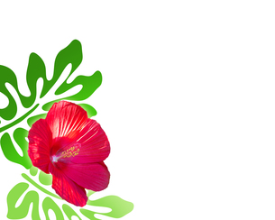 熱帯植物の写真素材 [FYI00274903]