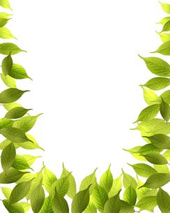 葉っぱフレームの写真素材 [FYI00275092]