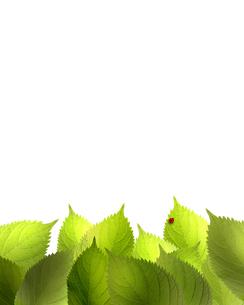 エコロジーの素材 [FYI00275110]