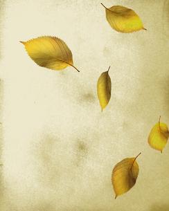レトロな落ち葉の写真素材 [FYI00275139]