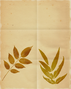 古い紙の写真素材 [FYI00275253]