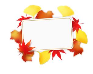 秋のフレームの写真素材 [FYI00275733]