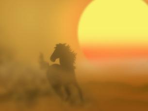 夕陽と馬の写真素材 [FYI00275793]