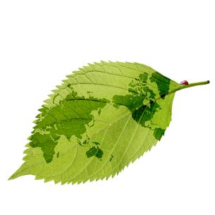 エコロジーの素材 [FYI00276473]