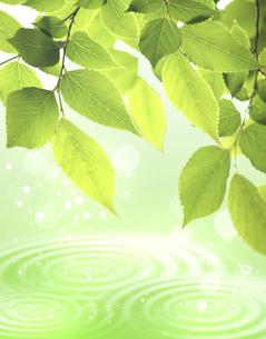 新緑と水面の写真素材 [FYI00276528]