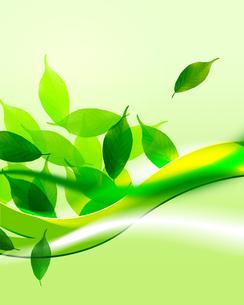 植物の葉の写真素材 [FYI00276653]