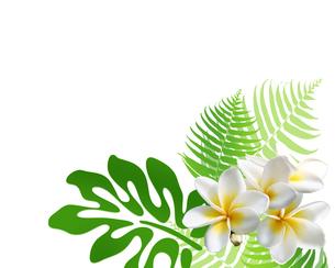 熱帯植物の写真素材 [FYI00277033]