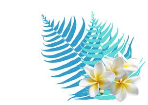 熱帯花植物の写真素材 [FYI00277399]